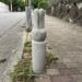 越木岩神社までの道路ぞいに「うさぎ」を発見【にしつー探偵】