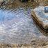 寒波に対抗。夙川の川の中の温泉で足湯してきた