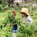 「こそだてファームランド・甲山」が農体験したい親子を募集してる